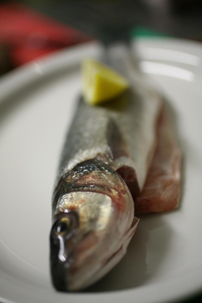 fish in de baars photo helma timmermans