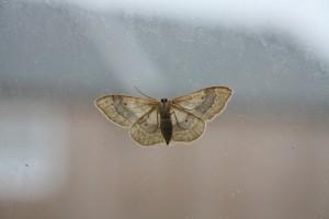 moth0001