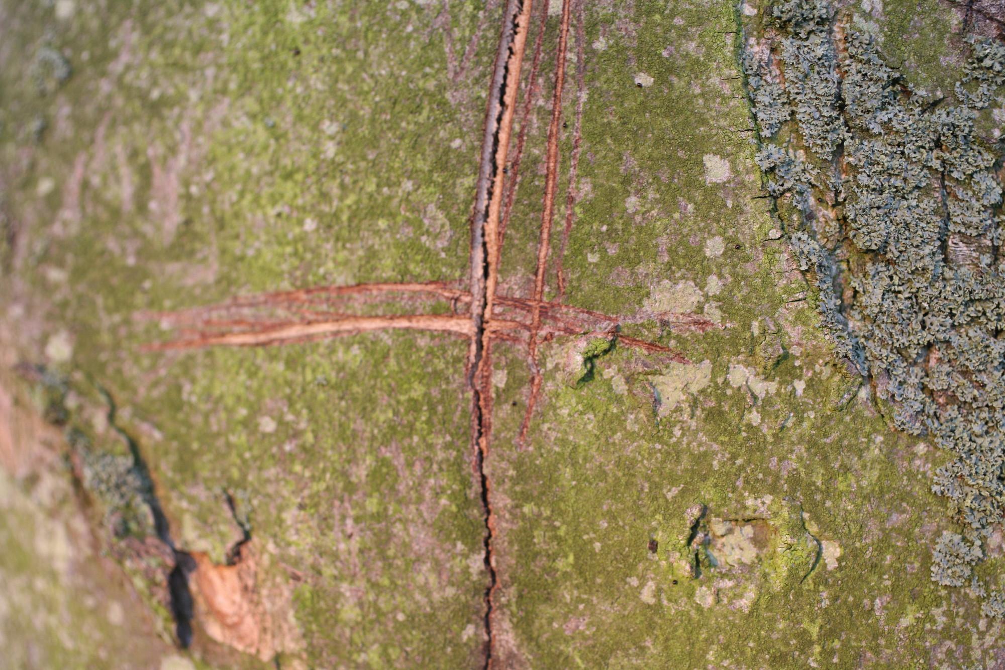 tree cross0001