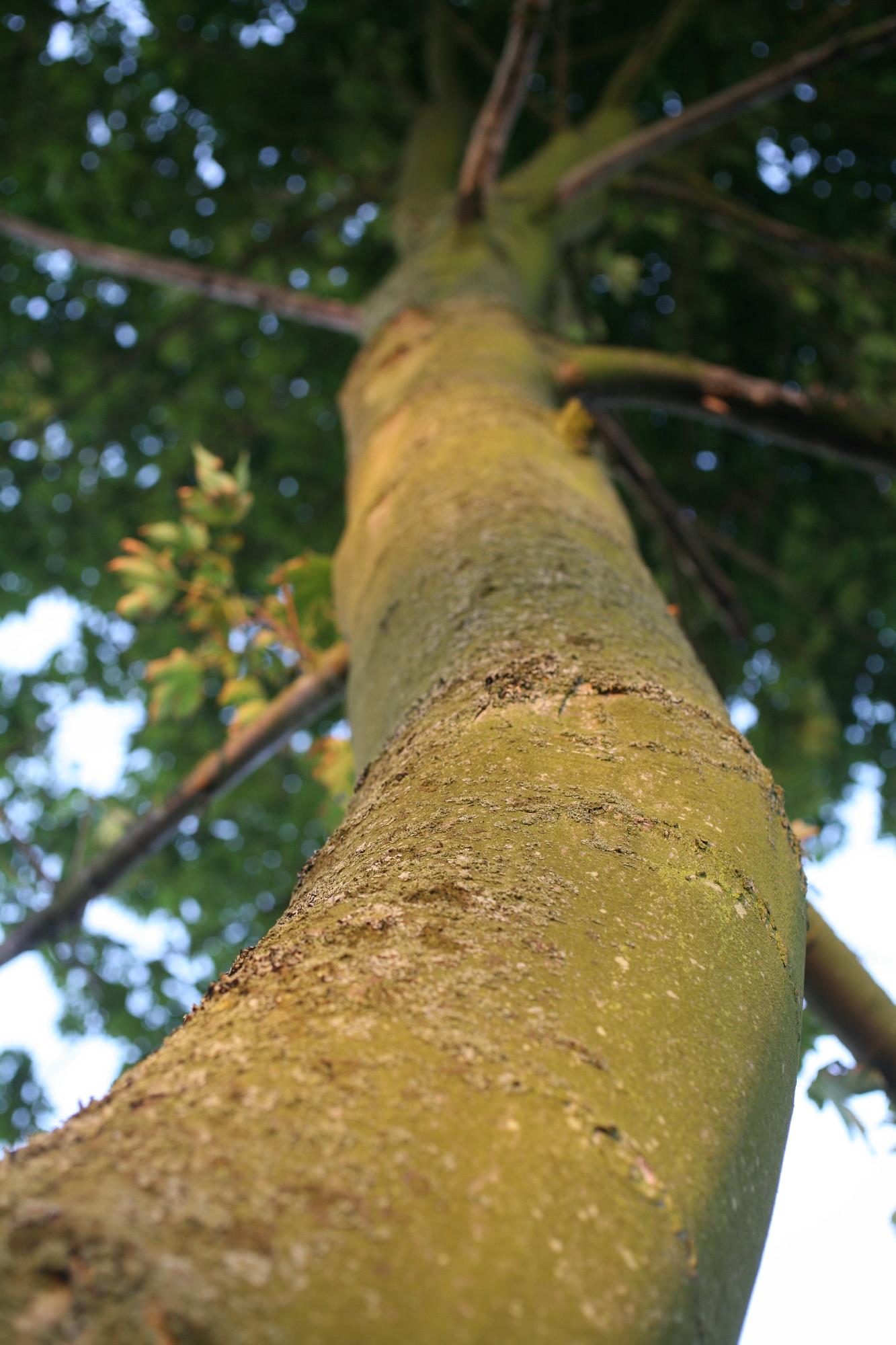 tree high 0001